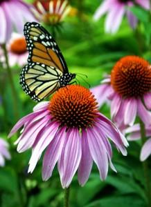 ButterflyFocalFlair